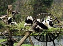 大熊猫栖息地
