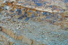 澄江化石地